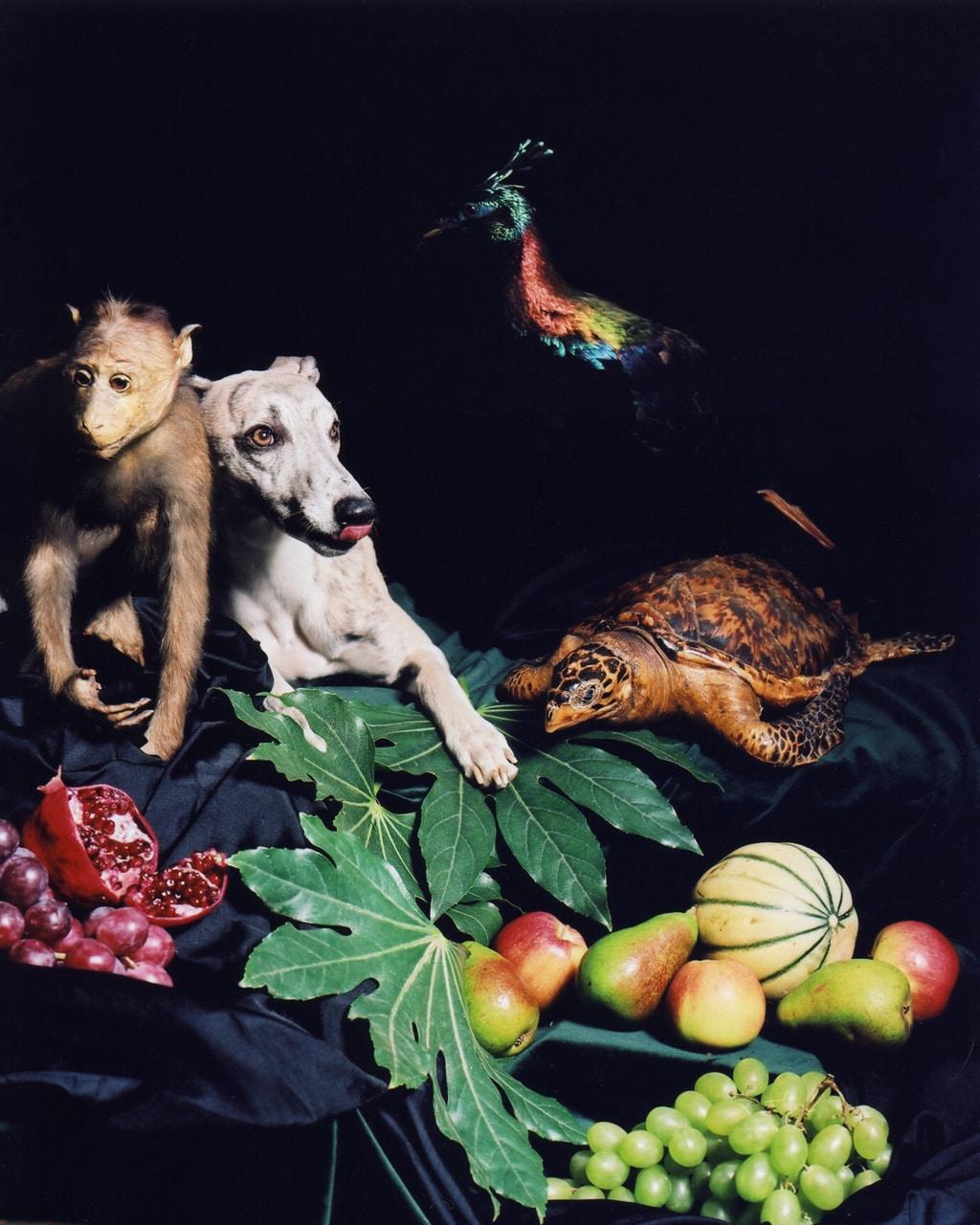 Nadin Rüfenacht, «Helden», aus der Serie «Nature Morte», 2005, Lambda Prints auf Alu, 125 x 100,5 cm