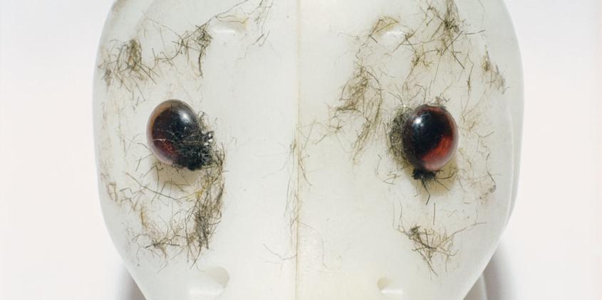 Wiedemann / Mettler, «morbus bestia 5», 2007, Lambda-Print auf Aluminium hinter Acrylglas